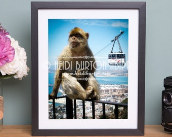 Photographic Art Print of Barbary Ape, Rock of Gibraltar.  Wildlife wall art, poster print, choose your size.