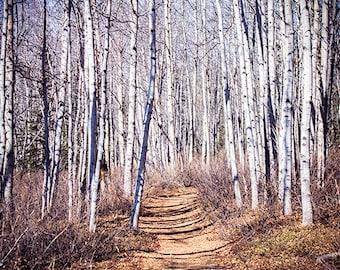 Nature Photography - Trees - Photography - Artwork - Home Decor - Photo - Wall Art - Flower Art - Fine Art Photography - Serenity Print