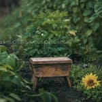 Sunflower Digital Background