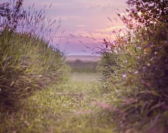 Digital Background Wheat Field Sunset