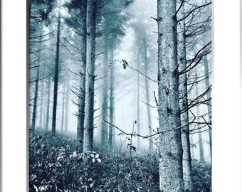 Trees in the mist, Limited Edition Print, with mount, two sizes available
