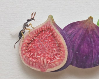 Pollinator - Fig wasp - fig fruit - Pollination - art - Nature - fruit art - wildlife - insect - watercolour art - paper cut - paper art