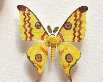 Pollinator - Moth - Comet moth - Pollination - moth art - art - Nature - gift - insect - wildlife - watercolour art - paper cut - paper art