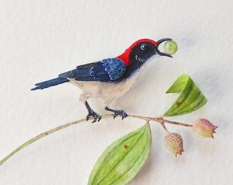 Bird - Pollinator - Scarlet backed flowerpecker - Pollination - art - bird art - gift - watercolour art - paper cut - paper art