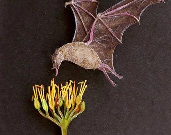 Pollinator - Bat - Lesser long nosed bat - Pollination - art - Nature - bat art - wildlife - watercolour art - paper cut - paper art