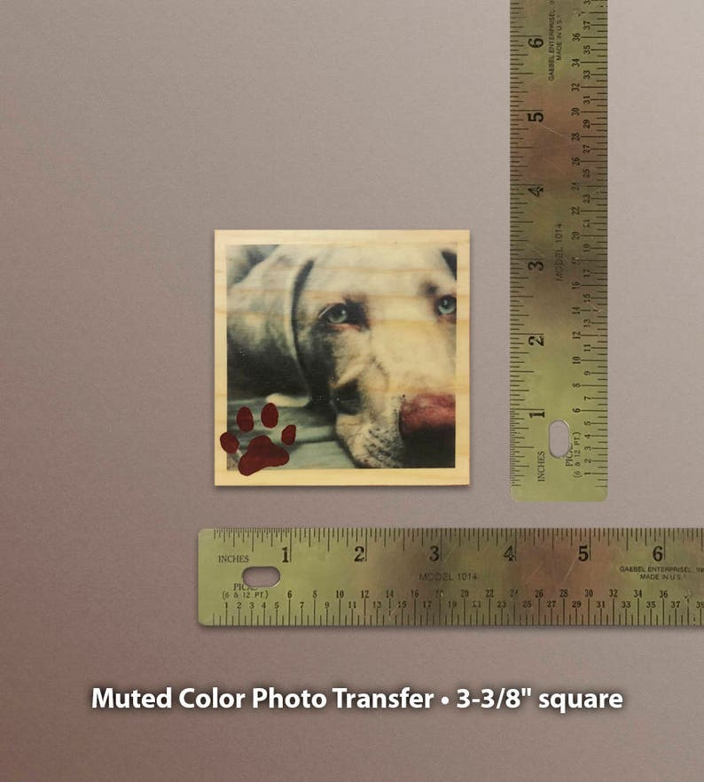 Weimaraner Photo Transfer Wood Block Art
