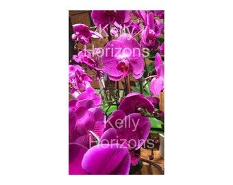 Photography / Phalaenopsis #1 / Digital Download