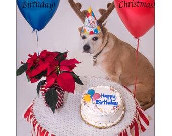 happy birthday merry christmas card catalouha hound mix birthday card christmas card balloons dog card humorous kathy kupka