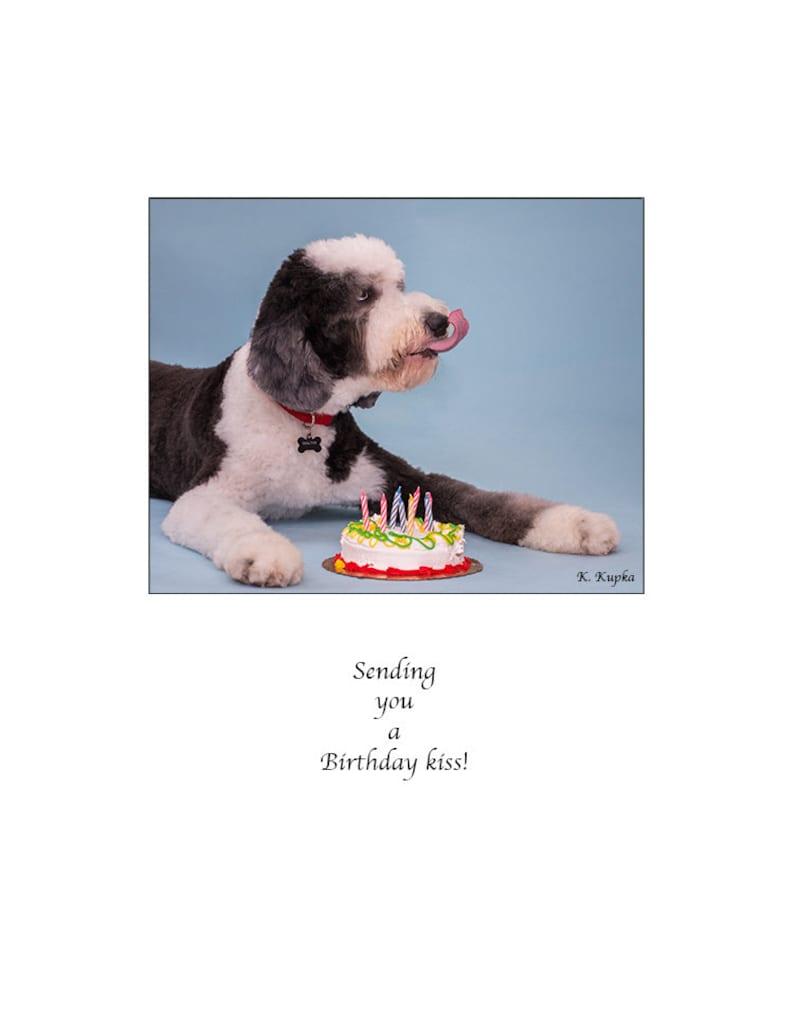 Carte Danniversaire Joyeux Anniversaire Sheepadoodle Carte De Chien Kiss Carte Danniversaire Gâteau Carte Drôle Gâteau