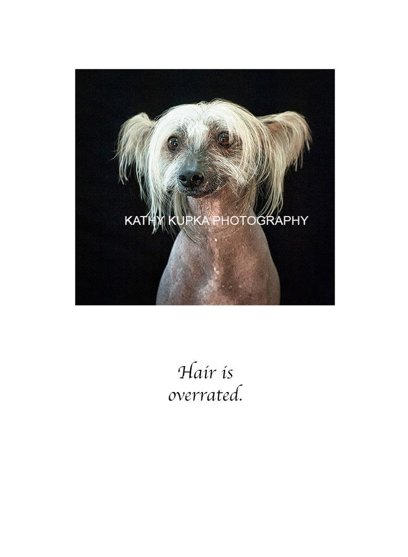 Get Well Cards Humorous Cancer Greeting Cards Cancer Encouragement Cards Kathy Kupka Dog Cards Cancer Card Chinese Crested Dog