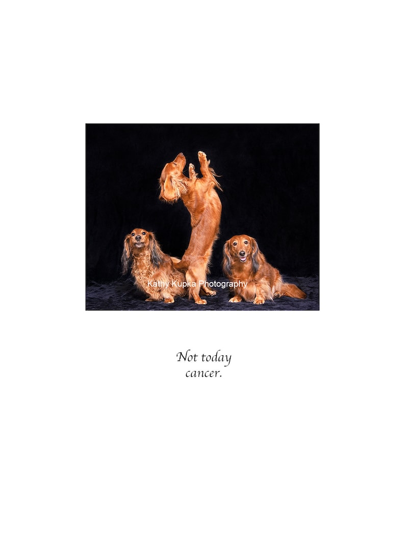 Kathy Kupka Not Today Cancer Dog Cards Cancer Doxies Cancer cards Dachshunds