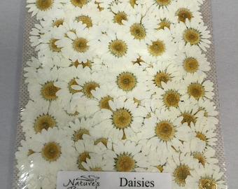 White Daisy 100 count