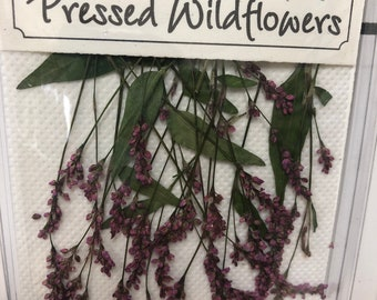 Snakeweed 18 Stems