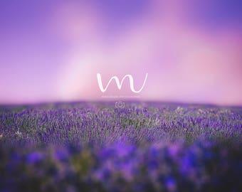 Dreamy lavender field- Digital Background