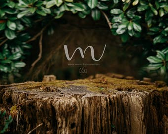 Tree- Stump- Forest- Newborn- Digital Background