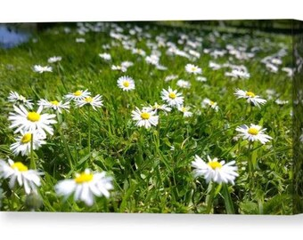 Summer daises / wall art canvas print