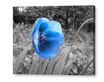 B&W colour splash blue flower / wall art canvas print