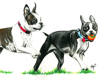 Dog art, Boston Terrier, print