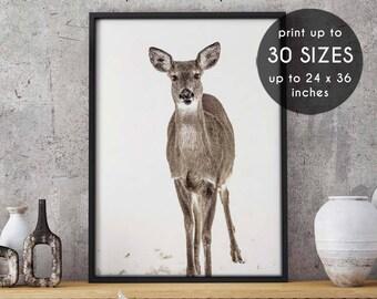 Antlers print, deer antler print, deer wall art, wall art, antler art, deer antlers, printable art, antler print, deer print, photograph, 91