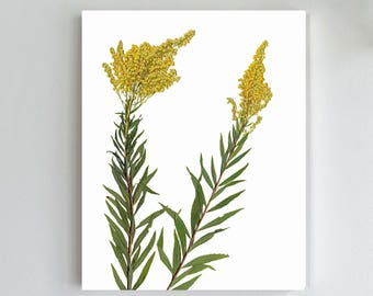 Goldenrod Art Print - Pressed Flowers Botanical Print - Herbarium Art - Yellow Flower Print - Dorm Room Decor - State Flower Print Wall Art