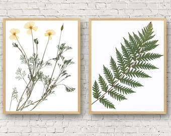 Fern and Flower Pressed Plant Prints, California Botanical Set, California Poppy, Giant Fern Print, Floral Giclee,Yoga Meditation Studio Art