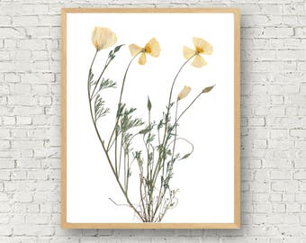 California Poppy Print, Pressed Poppy Flower, California State Flower, Yellow Poppy Botanical Print, Bridesmaid Gift, Nature Wedding, Modern