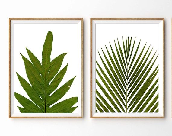 Tropical Plants Botanical Print Set Bamboo And Fern Prints Etsy