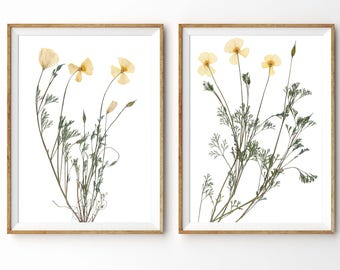 California Poppy Print Set, Nature Lover Wall Art, Botanical Print Set, California Nature Decor, Pressed Poppy Flower, Dried Floral Art