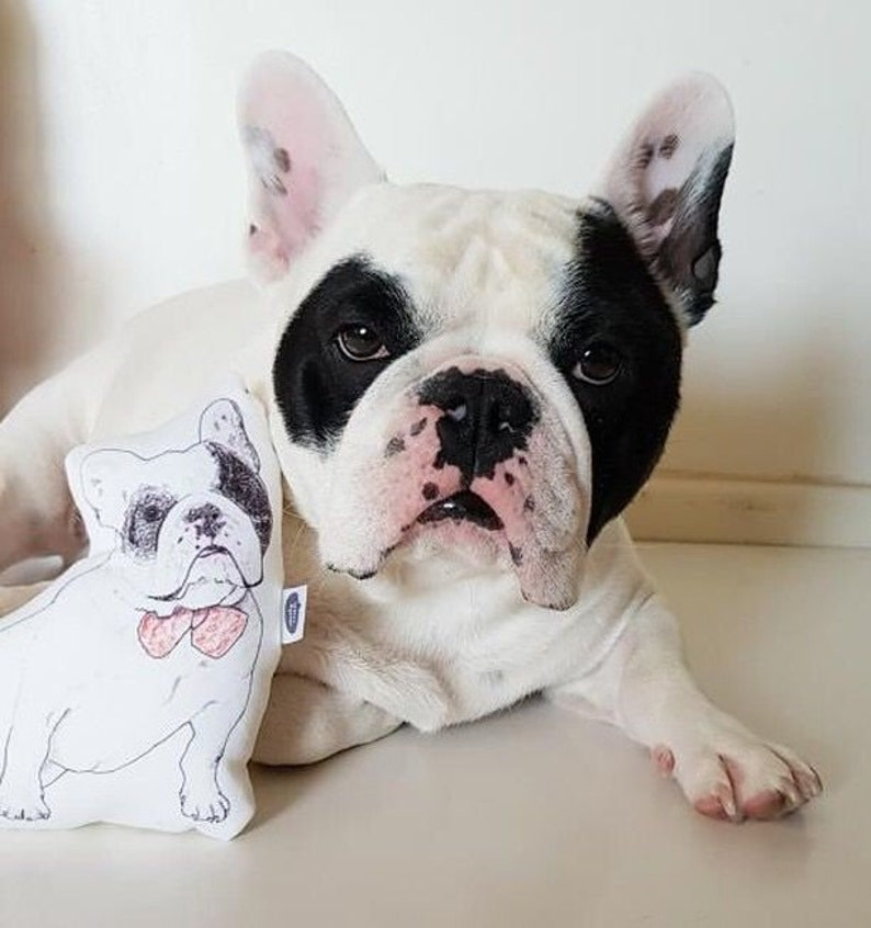 Dog posing with pillow