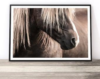 Horse Art Print, Animal Art, Horse Decor, Animal Prints, Horse Wall Art, Horse Gifts, Horse Photography Print, Stallion Print, Equine Art