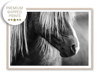 Horse Art Print, Black and White Photography Print, Large Wall Art