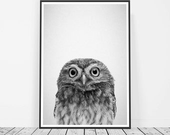 Owl Art, Woodland Nursery, Forest Print, Baby Owl Nursery Art, Forest Nursery Print, Owl Print, Owl Photograph Woodland Animal Forest Animal