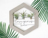 Air Plant Holder Wire Wood Love Grows Here Sign Boho Bedroom Wall Decor Air Plant Display Bridesmaid Gift Unique Air Planter