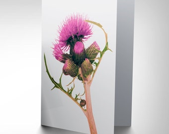 Thistle Card - Scottsh Flower Scotland Pretty Pink Blank Greetings Card CP155
