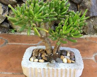 Concrete flowerpot for interior and exterior decoration