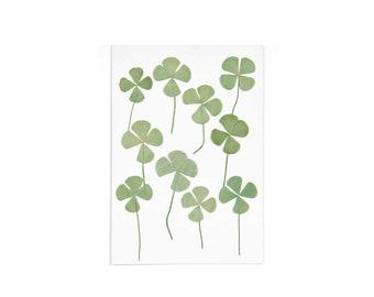 Pressed four-leaf clover leaf 10 pieces