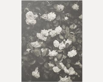 In Full Bloom No.1 - Giclée Print (Floral Art Print, Home Decor, Minimal Home, Scandi Style Art, Photographic Art Print, Roses Art Print)