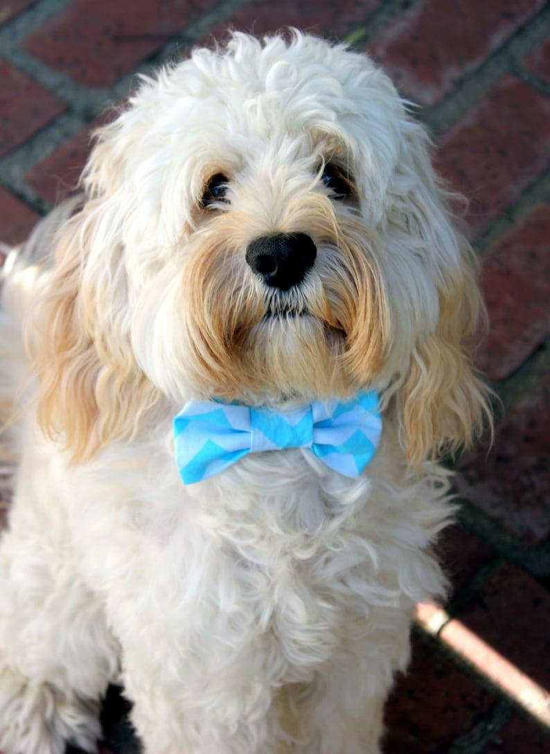 Blue Chevron Dog Bow Tie
