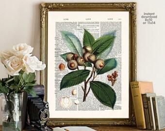 Quercus macrocarpa poster - Creative decor - Flower decor -  Poster Dictionary art, hipster Art - Print Wall Decor, Nursery Wall Art
