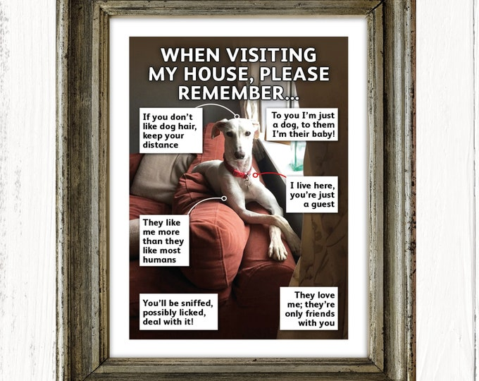 Put your dog or cat in the frame – personalised A4 print of your dog or cat, art print, Christmas gifts, birthday gifts, unframed