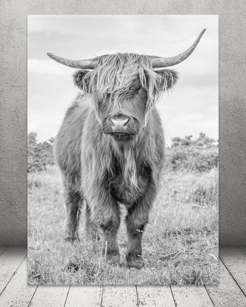 Highland cow print black and white photography prints large wall art print highland bull canvas