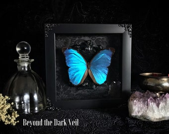 Victorian Blue Morpho Shadow Box, Butterfly Taxidermy, Butterfly Art, Real Butterfly, Framed Butterfly, Taxidermy Art, Gothic