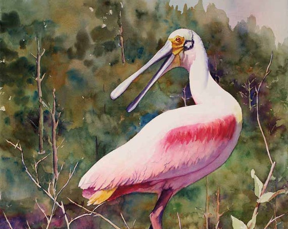 Roseate spoonbill, pink bird,  Louisiana marsh bird, watercolor art print