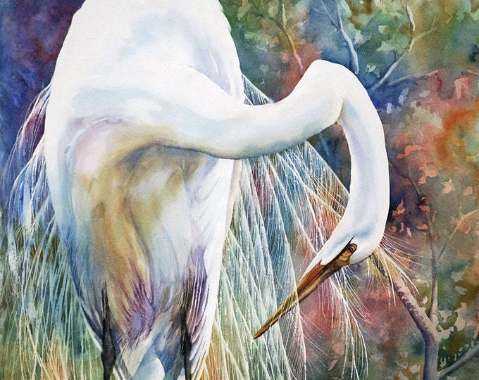 Great egret, wading bird, watercolor art print from watercolor painting, white bird print