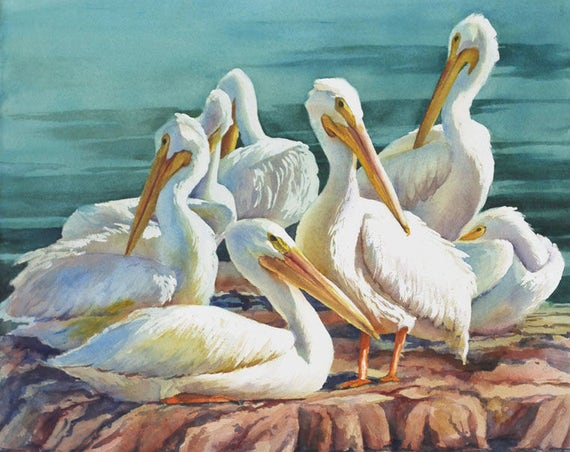 White pelicans coastal birds watercolor art print
