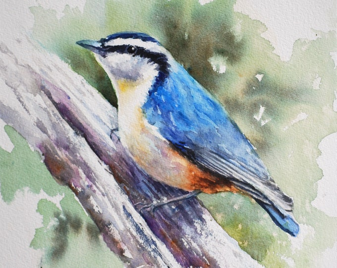 Red Breasted Nuthatch, original watercolor painting