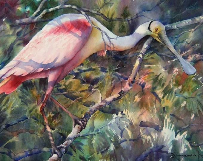 Roseate spoonbill, pink bird, Louisiana marsh bird watercolor art print