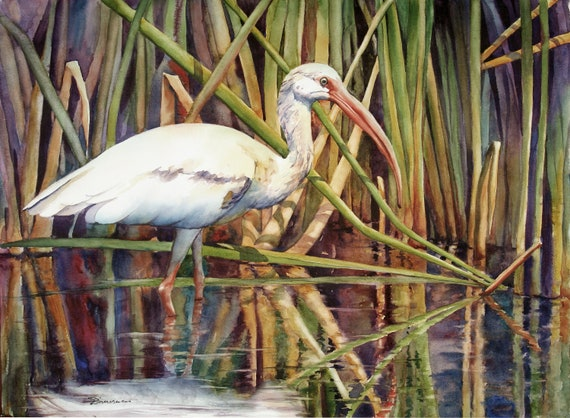 white ibis, wading bird, marsh bird, watercolor art print