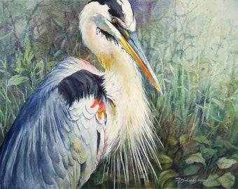 Great Blue Heron, marsh bird, watercolor print