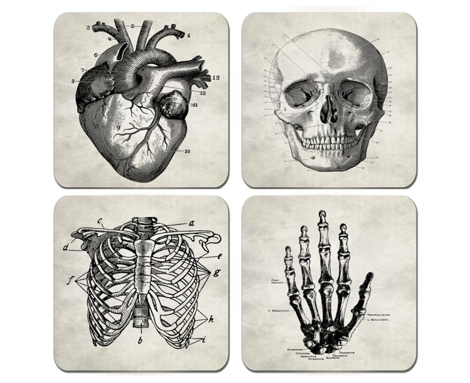 Human Anatomy - Set of 4 Coasters 1/4 inch thick Very High Quality ...